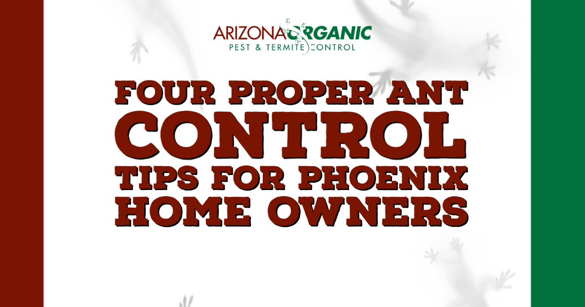 Blog Title: Four Proper Ant Control Tips For Phoenix Home Owners