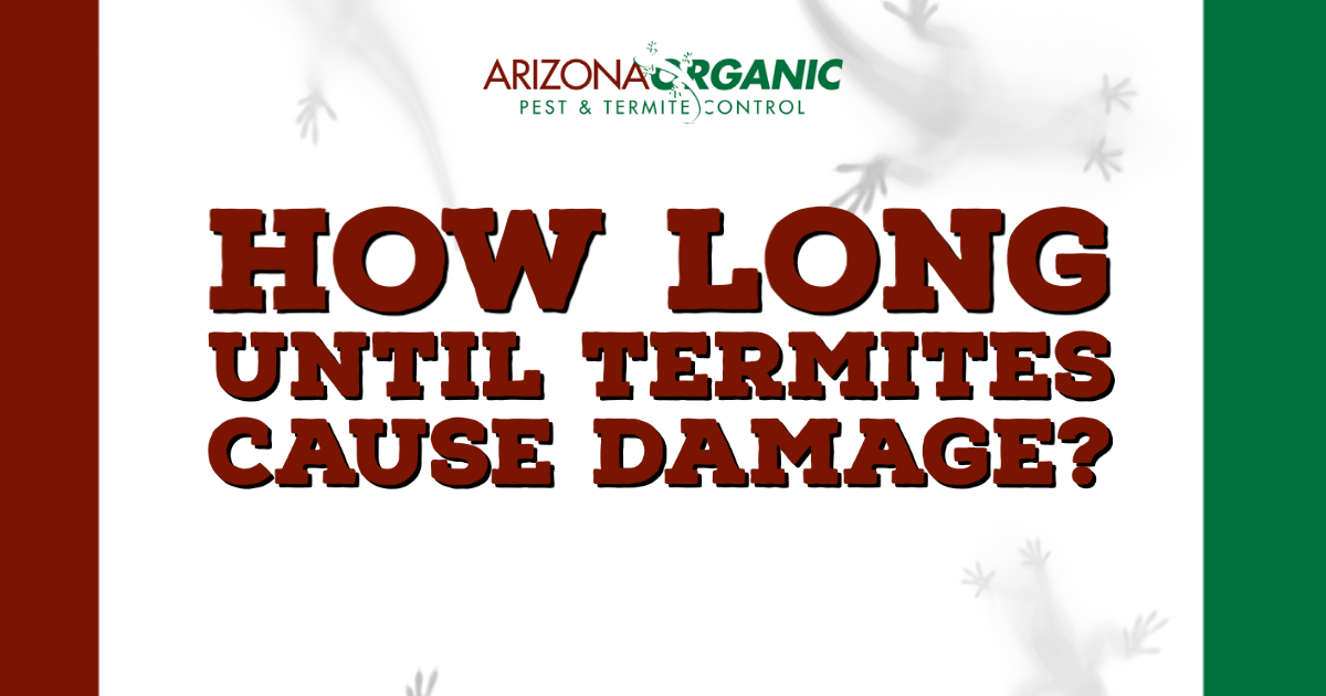 blog title: How Long Until Termites Cause Damage?