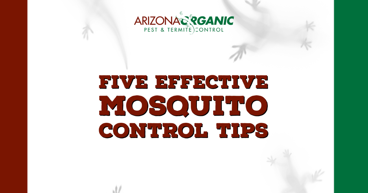 Five effective mosquito control tips