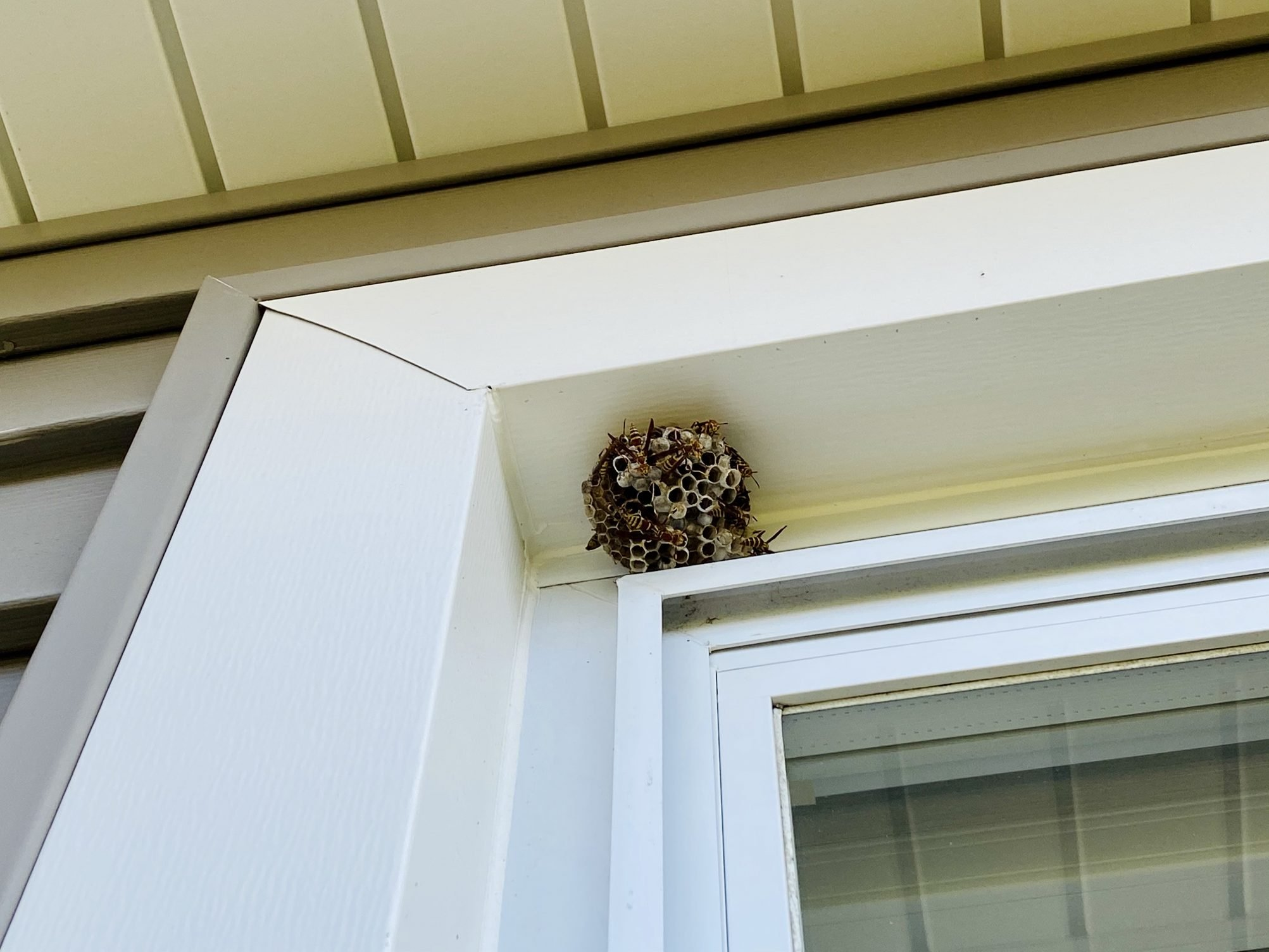 take care of a wasp nest